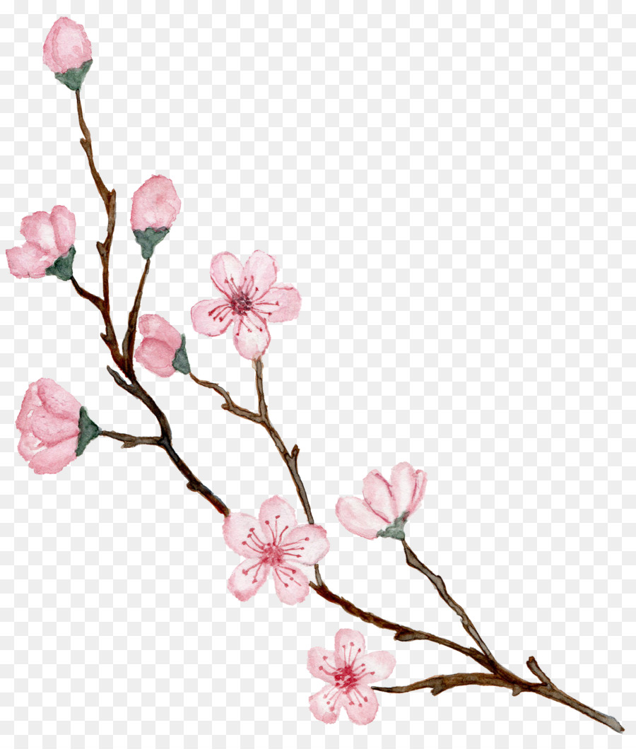 Cherry Blossom Cartoon Png Download 2688 3136 Free Transparent Cherry Blossom Png Download Cleanpng Kisspng