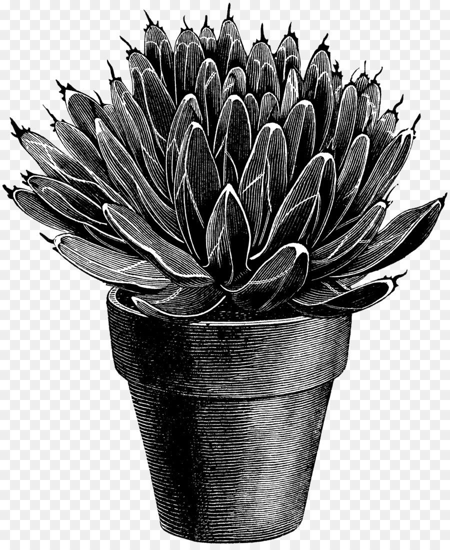 агава картинка черно белая посуда была разработана